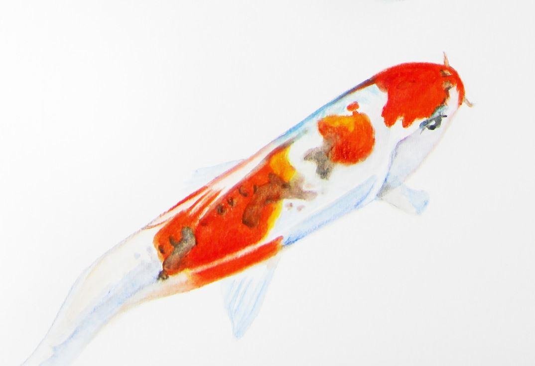 Tolle Sterne Fisch Färbung Seite Zeitgenössisch - Beispiel ...