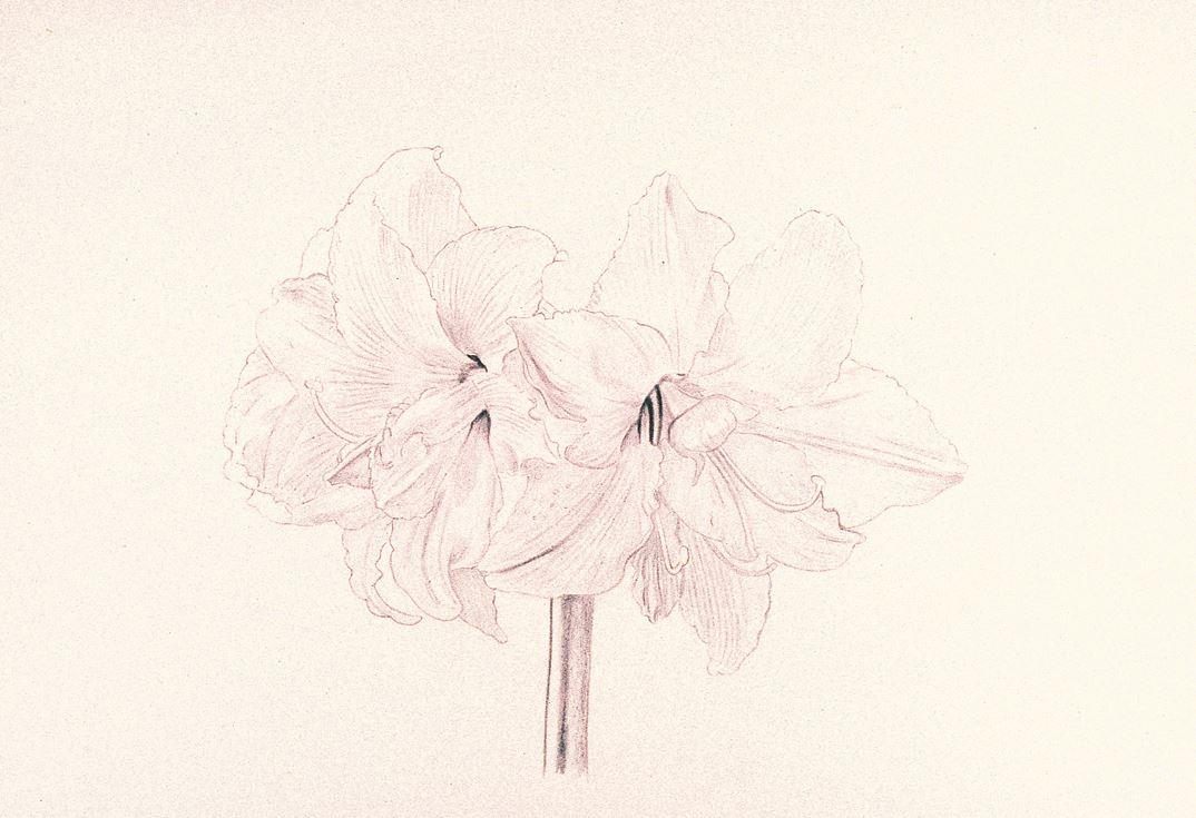 Blumenmotive Und Ihre Möglichkeiten