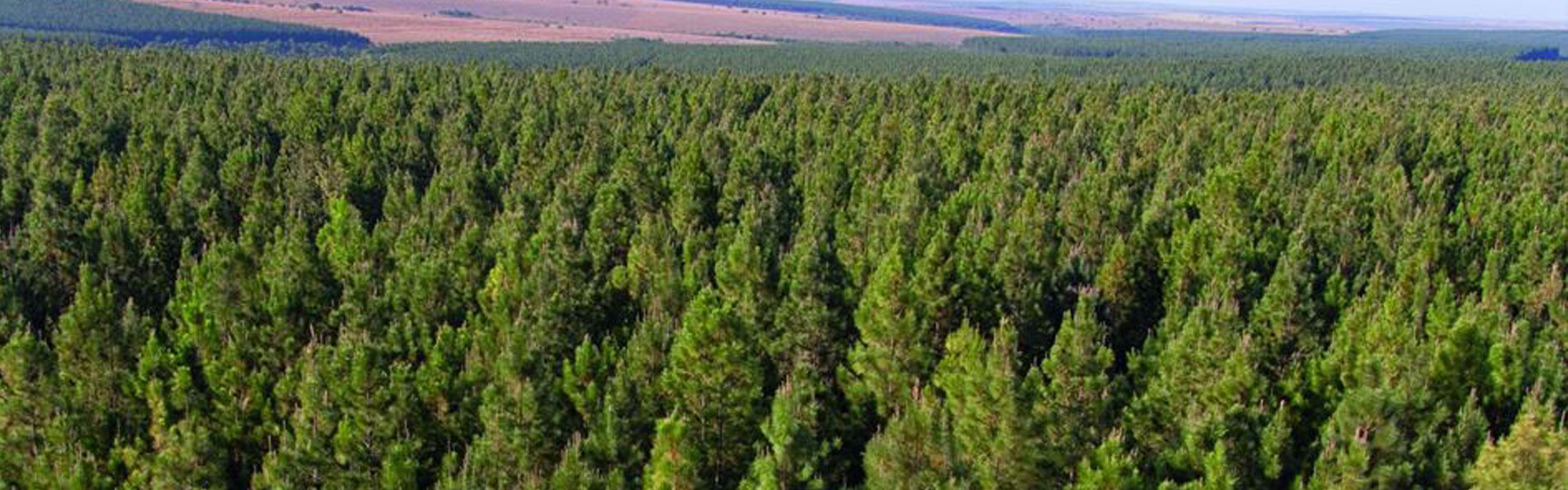 Q A S Umwelt Nachhaltigkeit